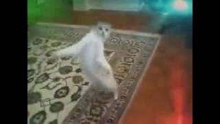 #Коты танцуют׃ Опа Ган-Гам стаил. Прикольное видео#