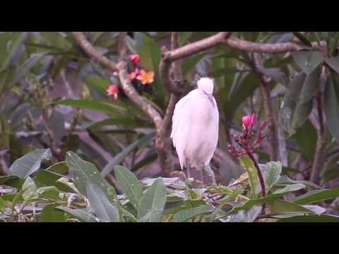 The Birds, Bali 2015
