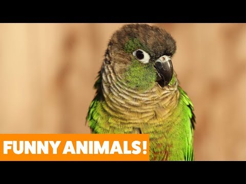 Don't Let Your Bird Eat This! | Funny Pet Videos 2019