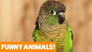don-t-let-your-bird-eat-this-funny-pet-videos-2019