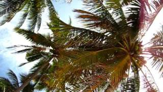 A long way up - How to climb a coconut palm
