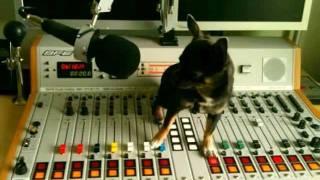MP Electro Remix von Self-X / Stromberg (Hallo) Hund im Büro RMX (HQ)