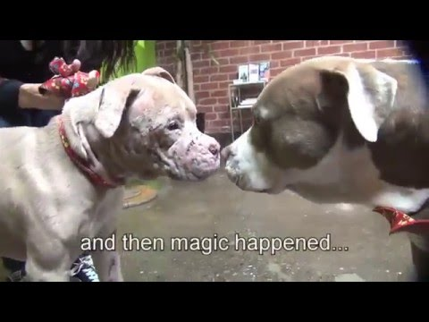 The Dog Rescue Story 2 - The one abandoned (Pit-bull dog) - Timeforpet