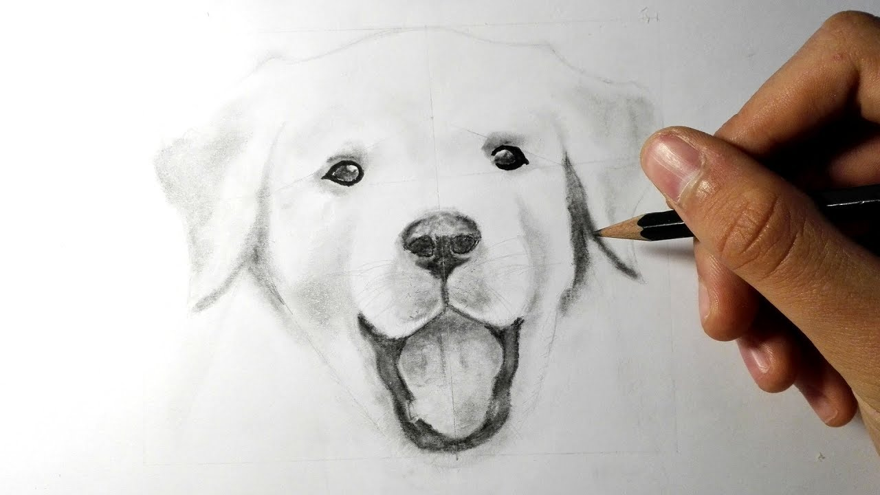 Favori Comment dessiner un chien [TUTORIEL] - YouTube GF83
