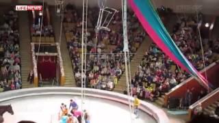Падение воздушной гимнастки в кировском цирке сорвалась во время трюка