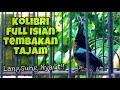 Masteran Konin Full Isian Tembakan Panjang Dan Besetan Pedas Untuk Pancingan Konin Agar Bunyi  Mp3 - Mp4 Download