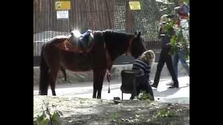 Девушки и лошади.   Girls and horses   ХЗ