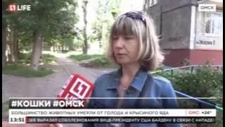 В Омске в подвале заживо замуровали кошек с котятами