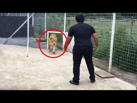 Dieser Löwe hat 7 Jahre verbracht, ohne seinen Meister zu sehen... Schau, was passiert ist