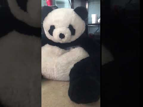 Tesh Small Brown Yorkie Dog Pops Out Of Panda Stuffed Animal Youtube
