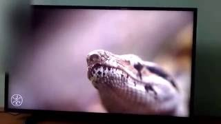 LG 43LH516A 43 Inch LED TV Video | Audio quality test