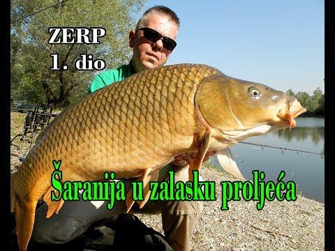 Šaranija u zalasku proljeća_ZERP 1. dio / Katran Neon_Wild Carp / Masterbih River_Spicy Tuna