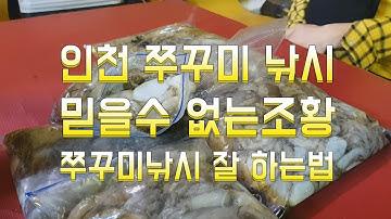 인천 만석부두 쭈꾸미 낚시 9월 21일 믿을수 없는 조황