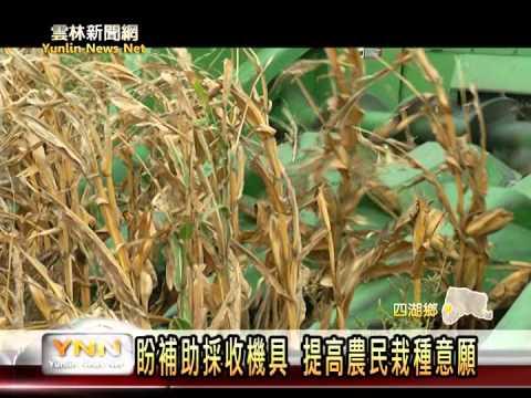 四湖契作硬質玉米,活化休耕農地
