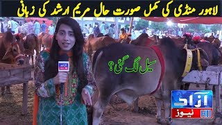 Lahore bull Mandi complete servay| Azaad news with Maryam Arshad at Bakra Mandi
