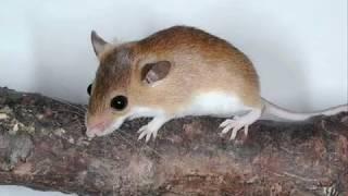 видео разведение мышей на корм