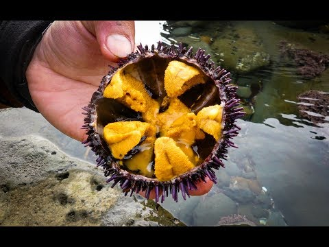 Catch and SUSHI Ep.2: UNI (Sea Urchin)