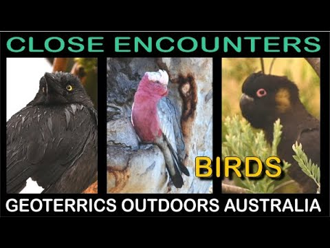 Close Encounters Birds 1 - HD - Geoterrics Outdoors Australia