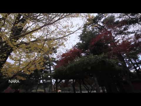 Osaka, Japan - Autumn Walk (HD)