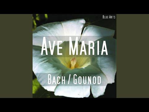 Ave Maria (Bach , Gounod)