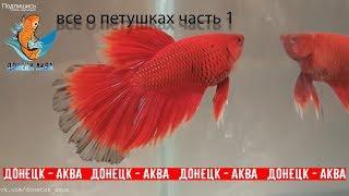 петушки часть 1, какие болезни рыбок, как и чем их вылечить,  akvariistika, akvaariumi kalad