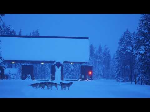 Wolves at West Yellowstone gate