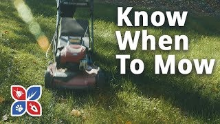 Do My Own Lawn Care - Know When to Mow