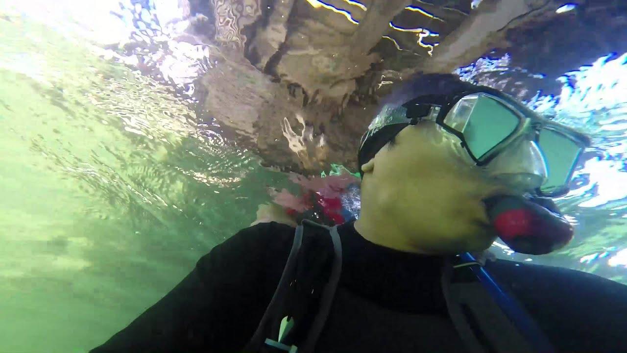 Snorkeling@clifton gardens - YouTube