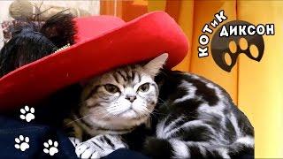 🐾😺  КОТиК ДИКСОН.Сборник веселых  фрагментов. Смешное видео про кошек.