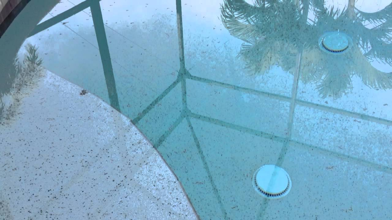 Black bugs in my pool by sweetwater pool service youtube Springtails in swimming pools