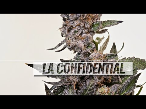 LA Confidential strain review