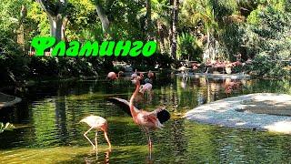 Фламинго. Детям про птиц.