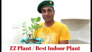 ZZ Plant/Best Indoor/Care Tips
