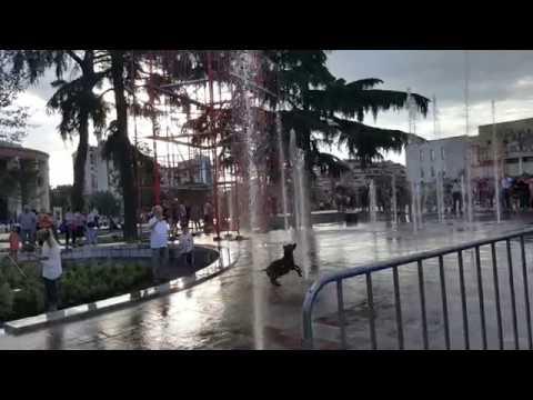 Dog playing in Skanderbeg Square, Tirana