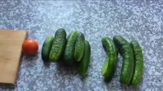 Огурец ГАРМОНИСТ, описание опыт выращивания.