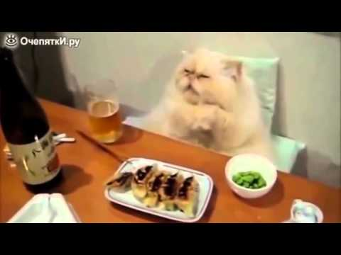 Funny Cats And Kittens Meowing Compilation 2016 #1