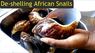 How to de-Shell Giant African Land Snails