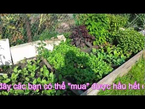 """Nguoivietgreika, thăm """" nông trại """" trồng rau của gia đình Oanh & Trương."""