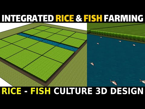 Integrated Rice Fish Farming System Model | Integrated Rice And Fish Farming 3D Design