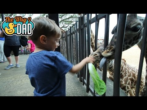 Should I Get A Zoo Membership?   What Are The Benefits?
