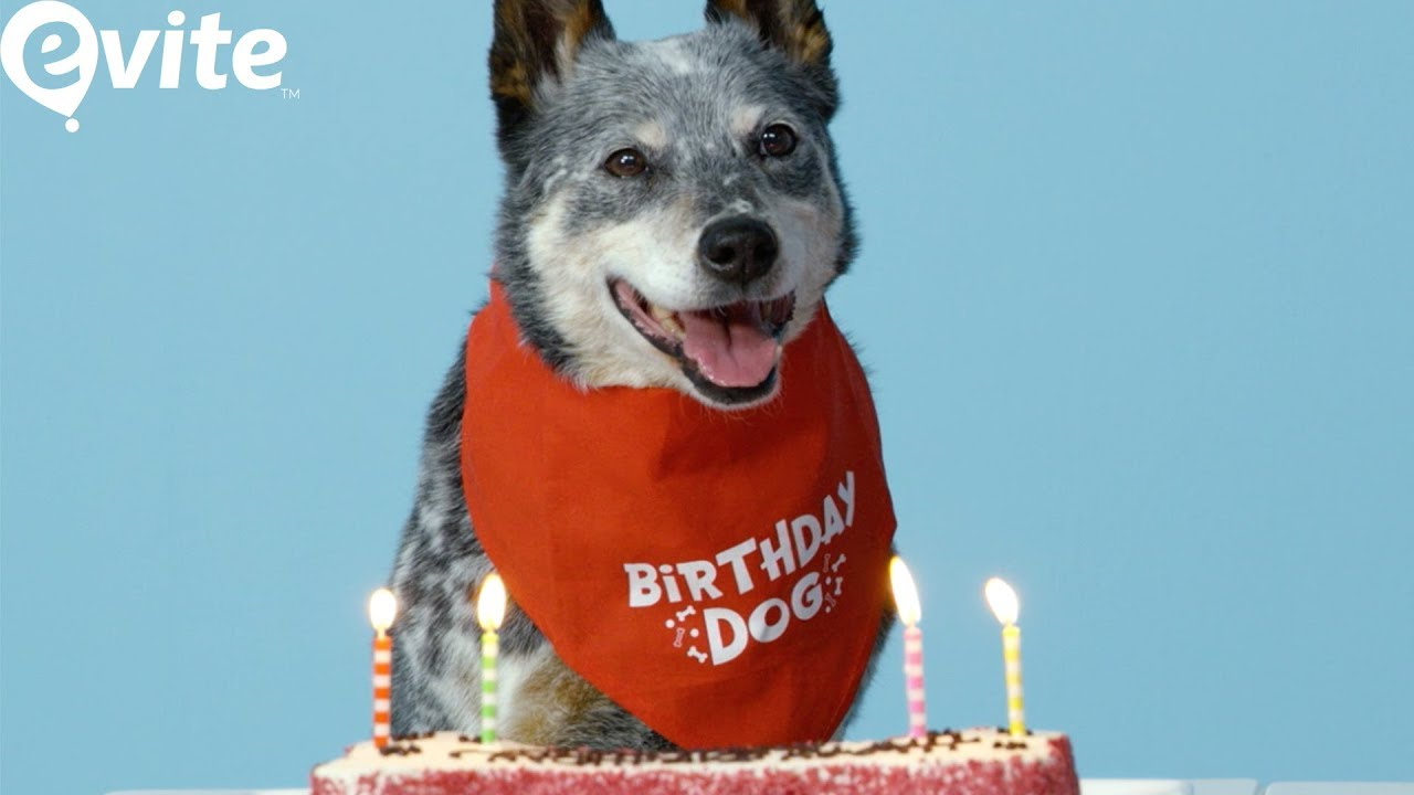 How to Throw Your Dog a Birthday Paw-ty for National Puppy Day ...