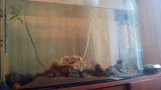 Принцесса Бурунди. Апистограмма Рамирези. ¥ Мои цихлиды и наша подводная територия. [Полный обзор].