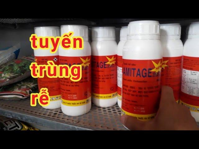 Các loại thuốc đặc trị tuyến trùng hại rễ