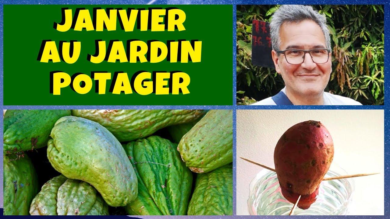 Le Jardin Potager En Janvier que planter au jardin potager en janvier ?