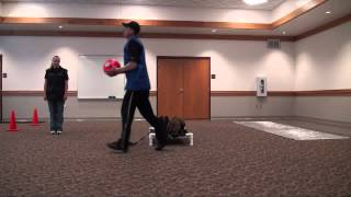 Meatball (cane Corso) Boot Camp Dog Training Demo
