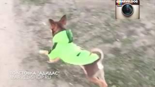 Одежда для собак(Модная одежда для собак MARVEL shop. Толстовка