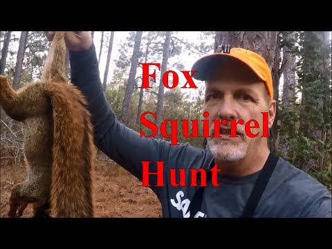 1st Fox Squirrel Hunt Of 2020 -  Squirrel Hunting
