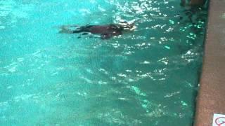 DEUBLERS KIDS kids swim 2 Erik 2 y.o  Alex 5 y.o