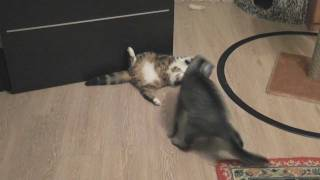 Cats Wrestling: Round One (Битва котов: Первый раунд)