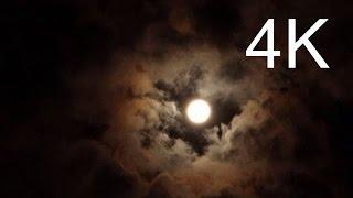 4K Film UHD, Forest Night Flight @ Full Moon